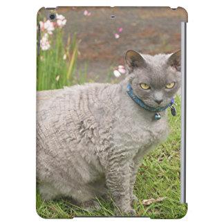 Gato del mascota de Devon Rex en jardín