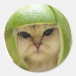 gato del melón pegatina