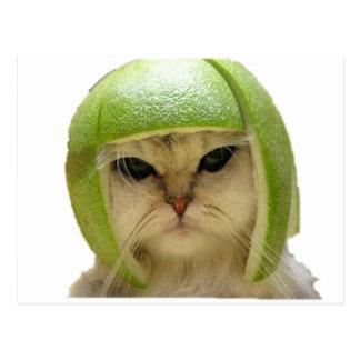 gato del melón tarjetas postales
