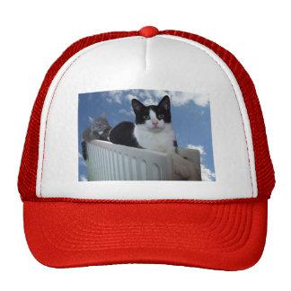 Gato del monorrail - gorra de béisbol de la edició