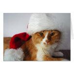 Gato del navidad en el gorra de Santa Felicitaciones