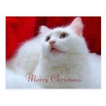 Gato del navidad tarjetas postales