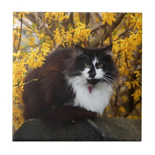 Gato del otoño azulejo cuadrado pequeño