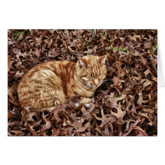 Gato del otoño tarjeton