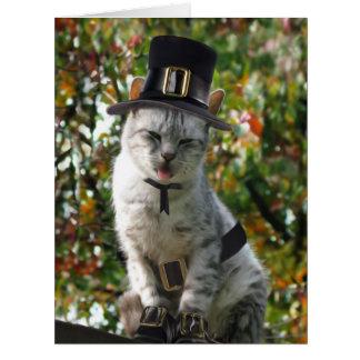 Gato del peregrino de la acción de gracias tarjeta