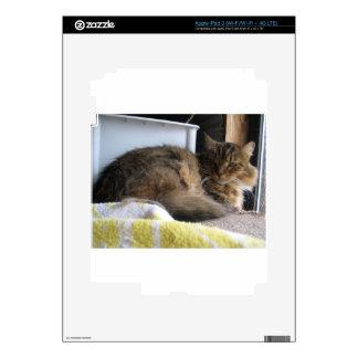 Gato del refugio pegatina skin para iPad 3