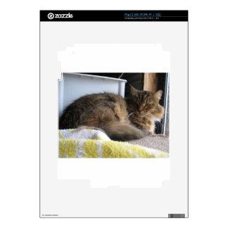 Gato del refugio skins para eliPad 2