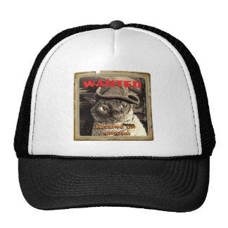 Gato del vaquero - querido gorra