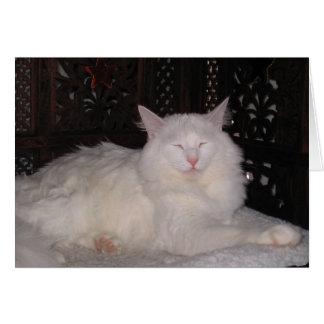 Gato del zen tarjetón