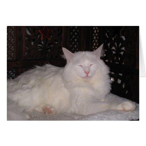Gato del zen tarjeta de felicitación