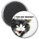 Gato del zombi puedo imán de Haz Brainz
