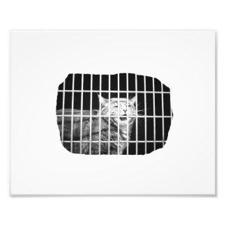 Gato detrás de barras con el gatito malo abierto d impresión fotográfica