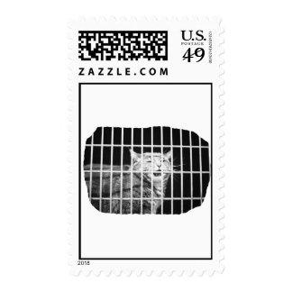 Gato detrás de barras con el gatito malo abierto sellos