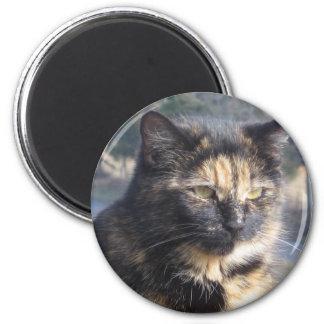 Gato dignificado imán redondo 5 cm