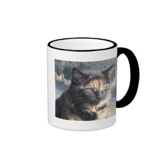 Gato dignificado taza de dos colores