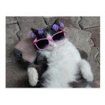 Gato divertido con los vidrios rosados tarjeta postal