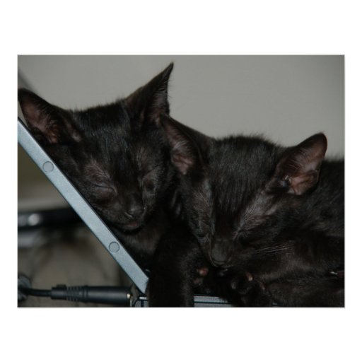 Gato Dubai - gatitos del ordenador portátil Posters
