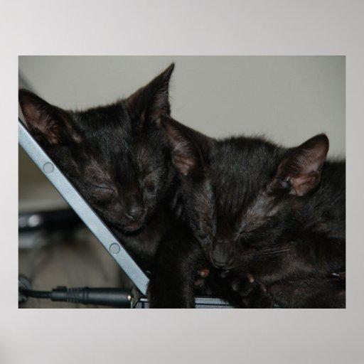 Gato Dubai - gatitos del ordenador portátil Póster