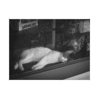 Gato el dormir en ventana de tienda impresion de lienzo