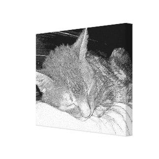 Gato el dormir impresiones en lona estiradas