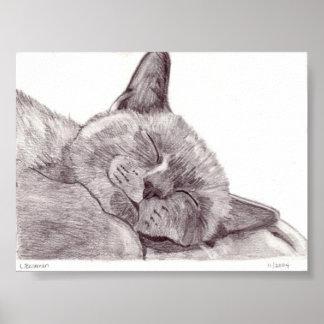Gato el dormir póster