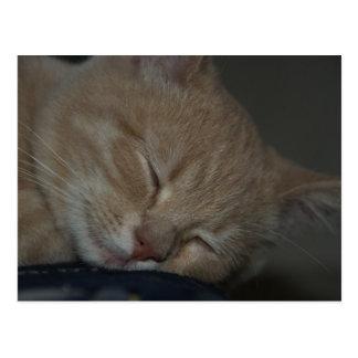 Gato el dormir postales