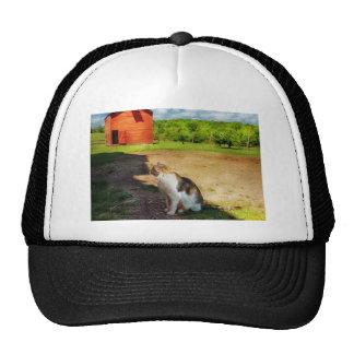 Gato - el perro ratonero gorras