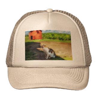 Gato - el perro ratonero gorro de camionero