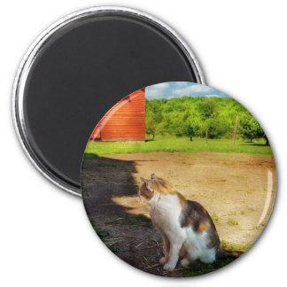 Gato - el perro ratonero imán