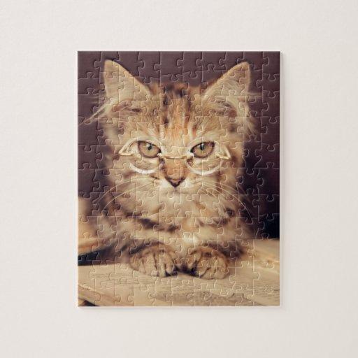 gato elegante puzzle con fotos