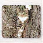 Gato en árbol alfombrillas de ratones