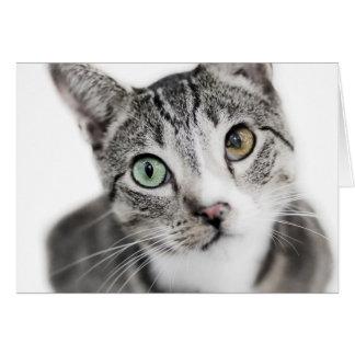Gato en blanco tarjeta de felicitación