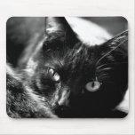 Gato en blanco y negro alfombrillas de raton