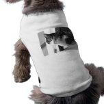 Gato en blanco y negro ropa para mascota