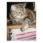 gato en el estante tarjetas postales