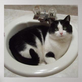 Gato en el fregadero poster