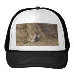 Gato en el gorra