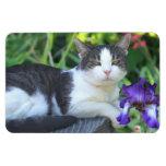 Gato en el jardín imanes rectangulares
