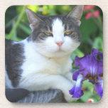 Gato en el jardín posavasos