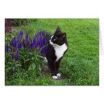 Gato en el jardín tarjetas