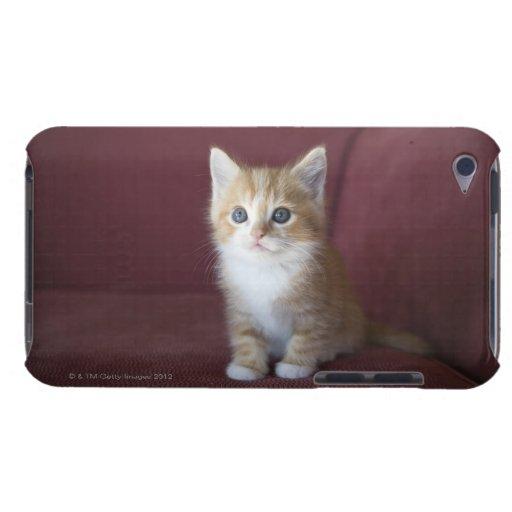 Gato en el sofá iPod Case-Mate carcasas