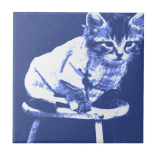 Gato en el taburete que lleva un suéter azulejo cuadrado pequeño