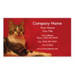 Gato en fondo rojo tarjetas de visita