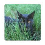 Gato en hierba posavasos de puzzle