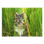 Gato en la foto de la hierba