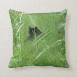 Gato en la hierba cojines