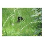 Gato en la hierba invitación 12,7 x 17,8 cm