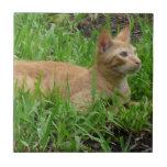 Gato en la hierba verde azulejos ceramicos