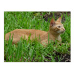 Gato en la hierba verde postal