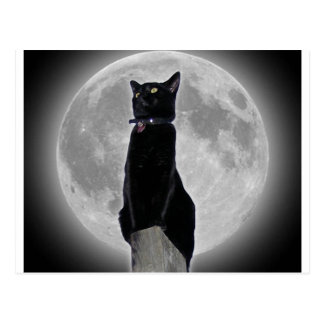 Gato en la luna postal